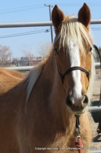 Echo - BLM Mare for Adoption
